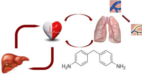 Aller à Using a small molecule to elucidate molecular targets for cardiovascular disease in women
